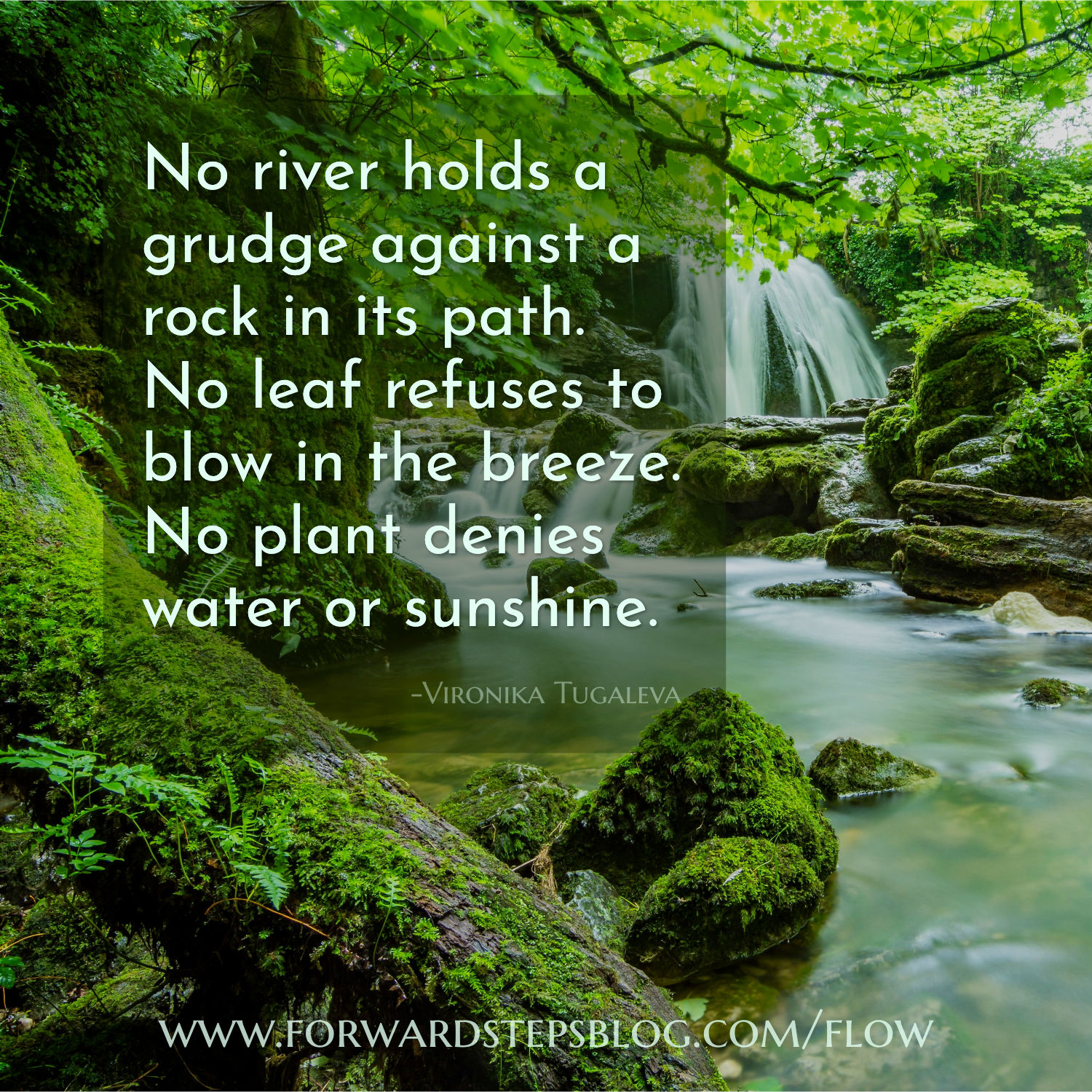No river holds a grudge - Forward Steps image_16