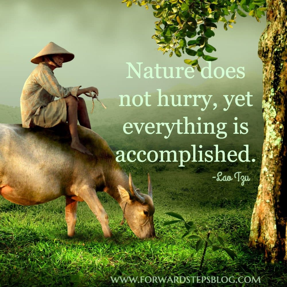 The man who planted trees quote image 3